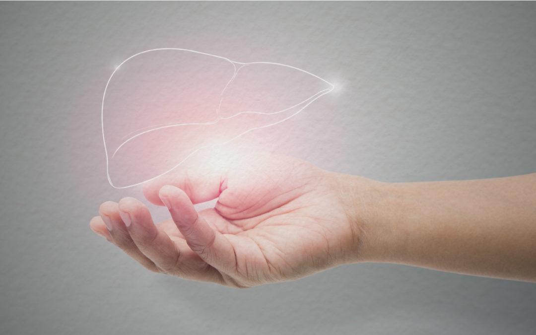 illustratie schone lever in een hand