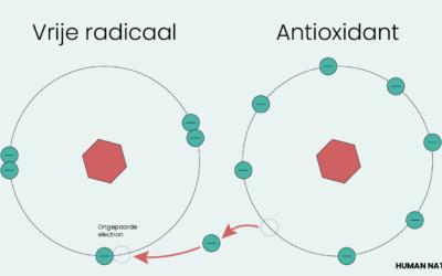 Wat Doen Antioxidanten voor je Lichaam?